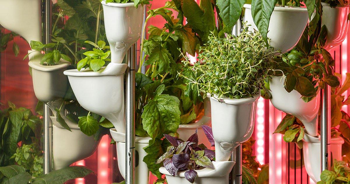 Natufia kitchen garden